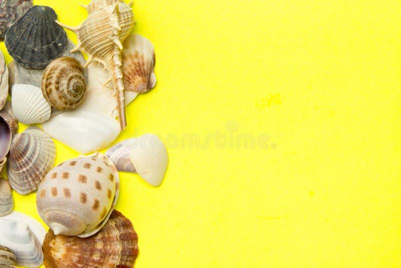 Concepto del tiempo de verano con las cáscaras del mar en el color amarillo p foto de archivo libre de regalías