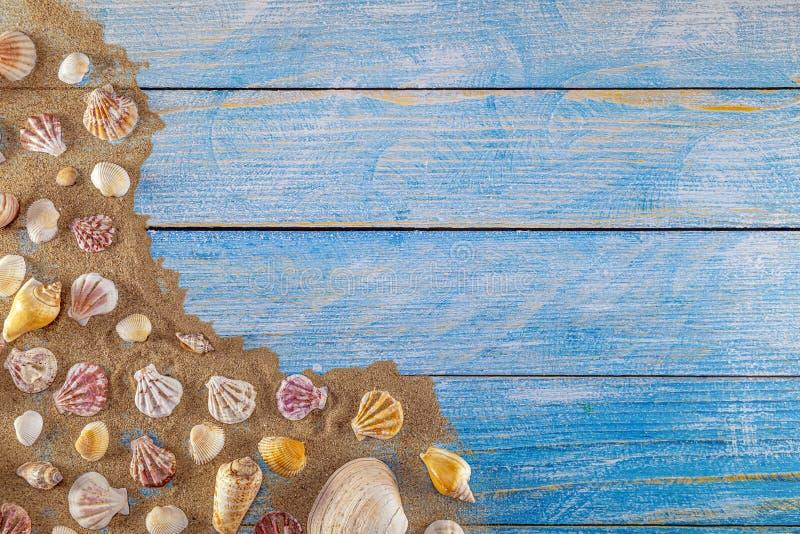 Concepto del tiempo de verano con las cáscaras del mar en un fondo y una arena de madera azules fotos de archivo