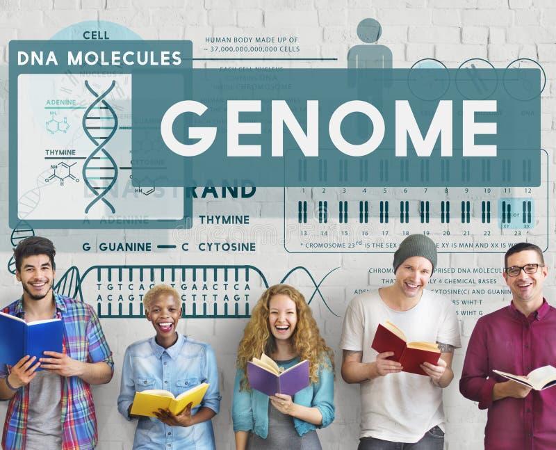 Concepto del tronco de la identidad de la DNA de la célula de la biología de la codificación del genoma imagen de archivo libre de regalías