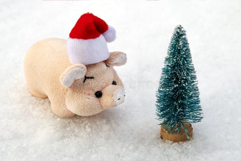 Concepto en el tema de celebrar una Feliz Año Nuevo y vacaciones de invierno Un pequeño cerdo rosado en un sombrero rojo de Santa foto de archivo
