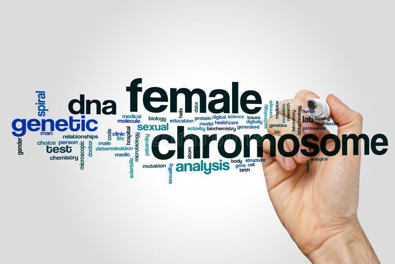 Concepto femenino de la nube de la palabra del cromosoma en fondo gris fotografía de archivo