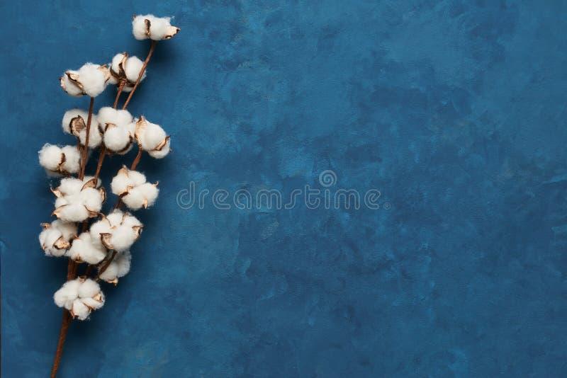 Concepto femenino: fondo azul con la rama del cott artificial imagenes de archivo