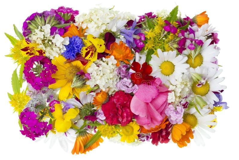 Concepto floral del verano imagenes de archivo