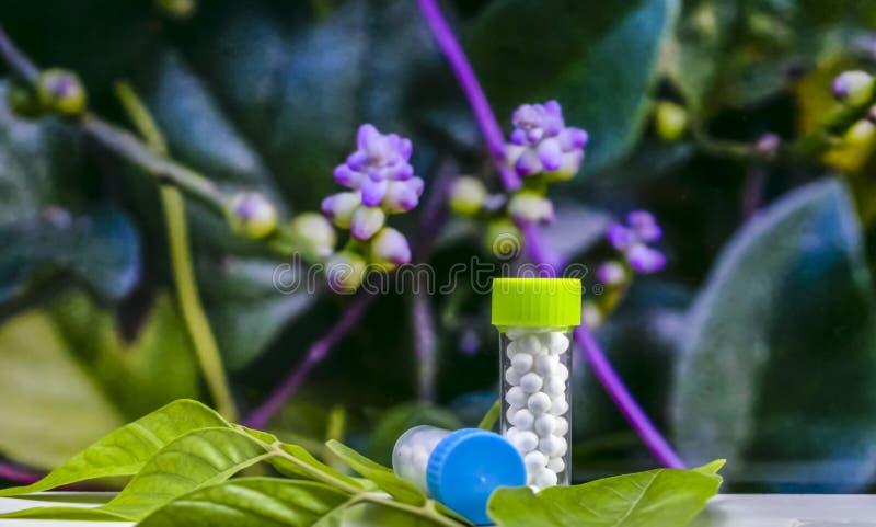 Concepto homeopático - botellas de píldoras homeopáticas del sugarball en las hojas verdes con el fondo púrpura salvaje borroso d imagen de archivo libre de regalías