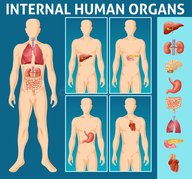 Concepto interno de las piezas del cuerpo humano de la historieta stock de ilustración