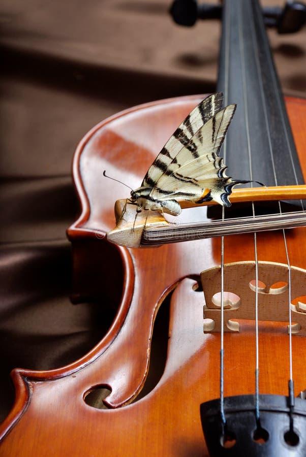 Concepto musical Violín y mariposa mariposa en el arco Swallowtail de la vela Cierre para arriba fotos de archivo