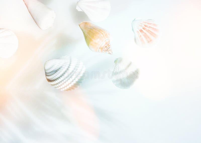 Concepto n?utico creativo del verano C?scaras hermosas del mar de diversos colores de las formas en rosa amelocotonado de la turq foto de archivo