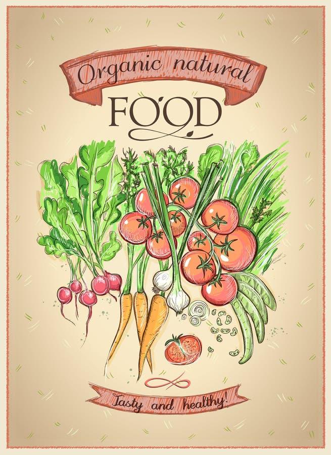 Concepto natural orgánico del cartel de la comida con las verduras clasificadas ilustración del vector