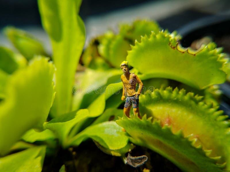 Concepto o idea de la película Perdido en la selva de Venus Flytrap Utilicé la pequeña figura en la planta real imagenes de archivo