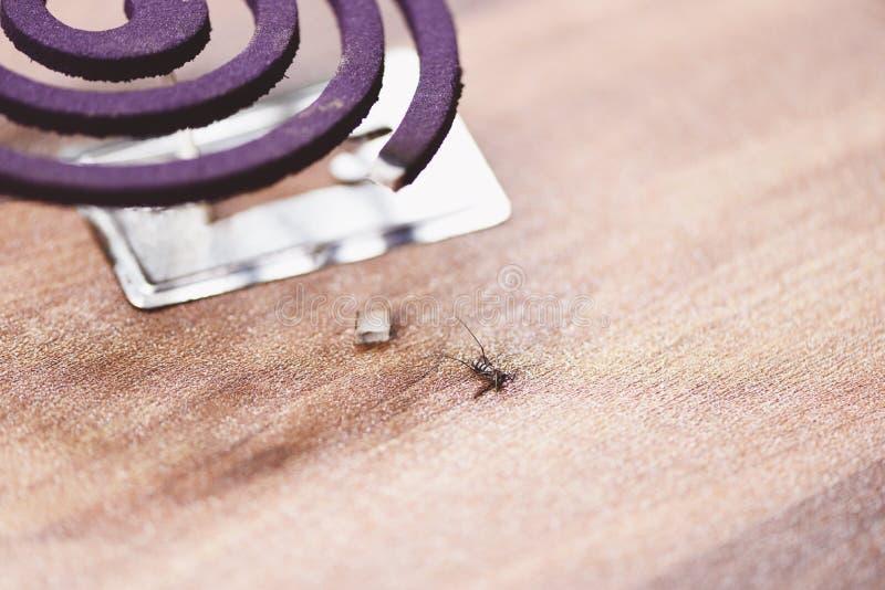 Concepto repugnante del mosquito - la bobina ardiendo del mosquito es un repulsivo anti y muertos del mosquito en el piso foto de archivo