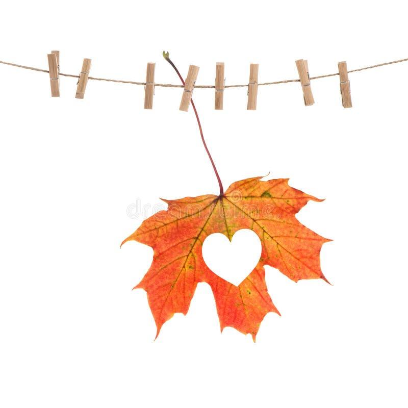 Concepto rojo del amor del corazón de la hoja de arce del otoño imagen de archivo libre de regalías