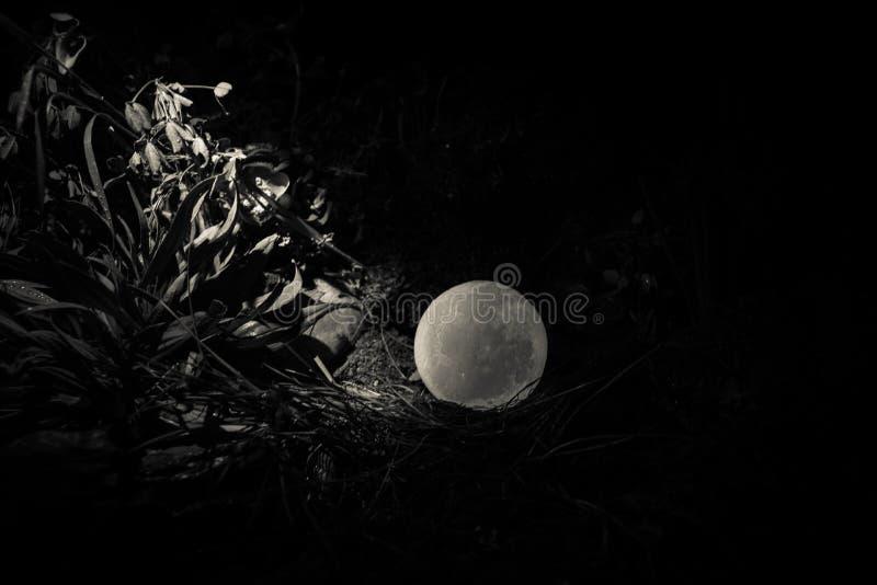 Concepto surrealista de la fantasía - Luna Llena que miente en hierba Foto adornada Fondos de hadas abstractos foto de archivo
