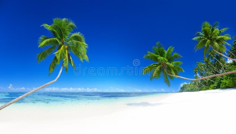 Concepto tropical de las vacaciones de verano de la playa de las palmeras imágenes de archivo libres de regalías