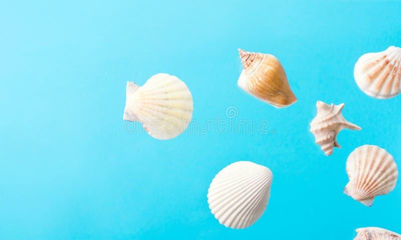 Concepto tropical del verano náutico creativo Cáscaras hermosas del mar de diversos formas y colores en fondo azul de la pendient imagenes de archivo