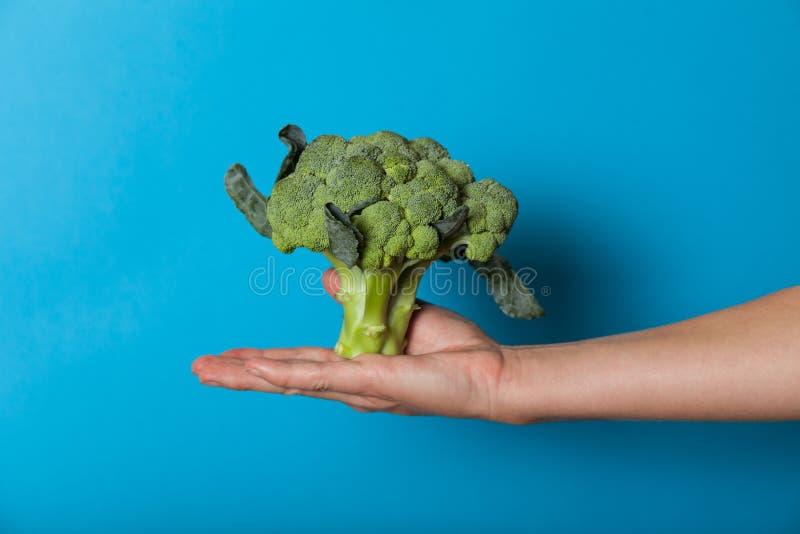 Concepto vegetariano de la forma de vida, manos que sostienen la verdura para la dieta fotos de archivo