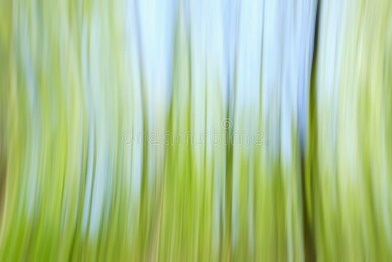 Concepto verde del día del árbol del ambiente mundial Fondo borroso extracto de la puesta del sol de la textura de los árboles fotografía de archivo