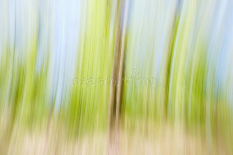 Concepto verde del d?a del ?rbol del ambiente mundial Fondo borroso extracto de la puesta del sol de la textura de los ?rboles imagenes de archivo
