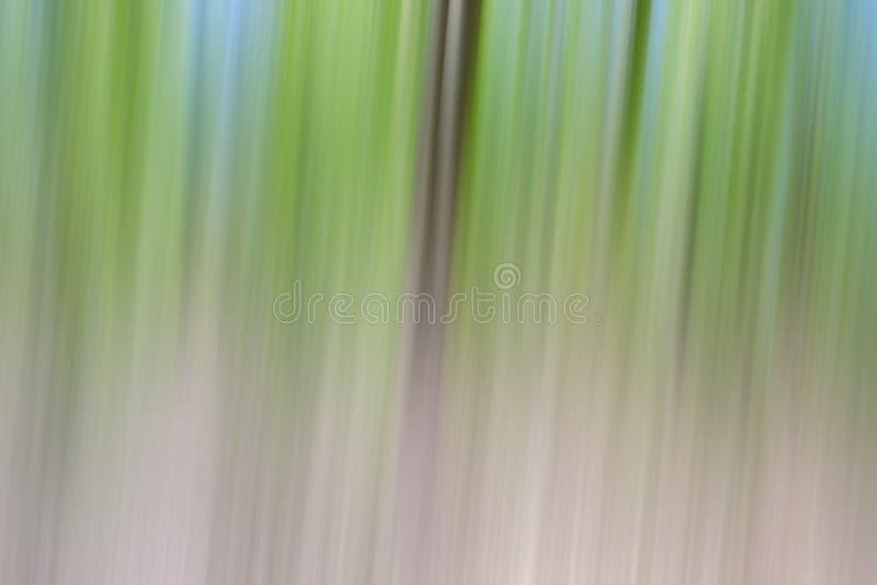 Concepto verde del d?a del ?rbol del ambiente mundial Fondo borroso extracto de la puesta del sol de la textura de los ?rboles imágenes de archivo libres de regalías