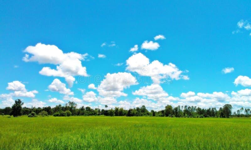 Concepto verde del infinito del ambiente del cielo azul del campo imagen de archivo