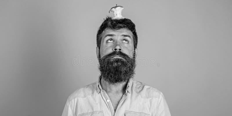 Concepto vivo de la blanco Toc?n casi comido largo de la manzana de la barba del inconformista hermoso del hombre en la cabeza co foto de archivo