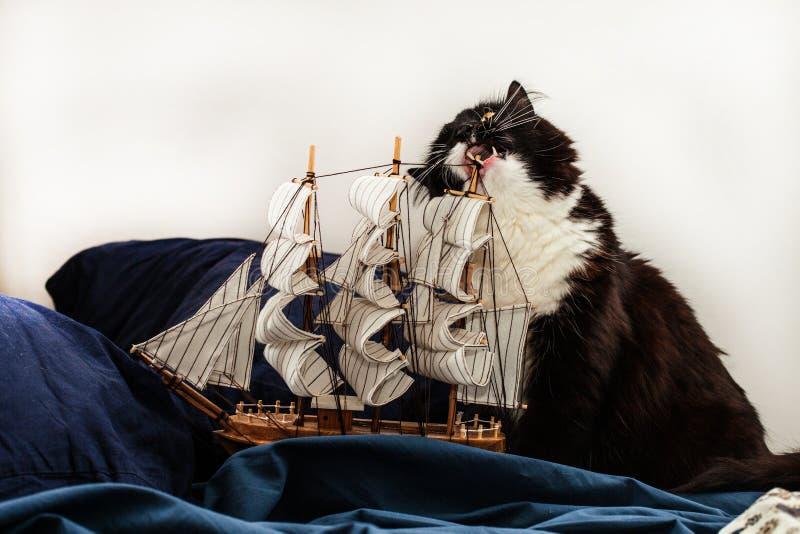 Conceptos de negocio y de creatividad el gato blanco y negro gigante roe el palo de un modelo de un velero en un lecho azul foto de archivo libre de regalías