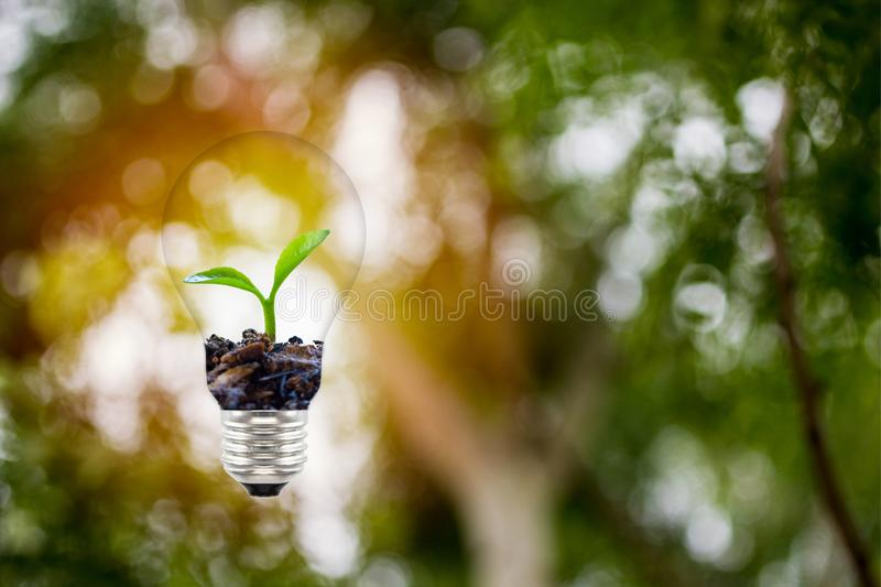 Concepts about the environment and the growth of natural trees. Small plat or sprout growing in light bulb on green nature stock photography