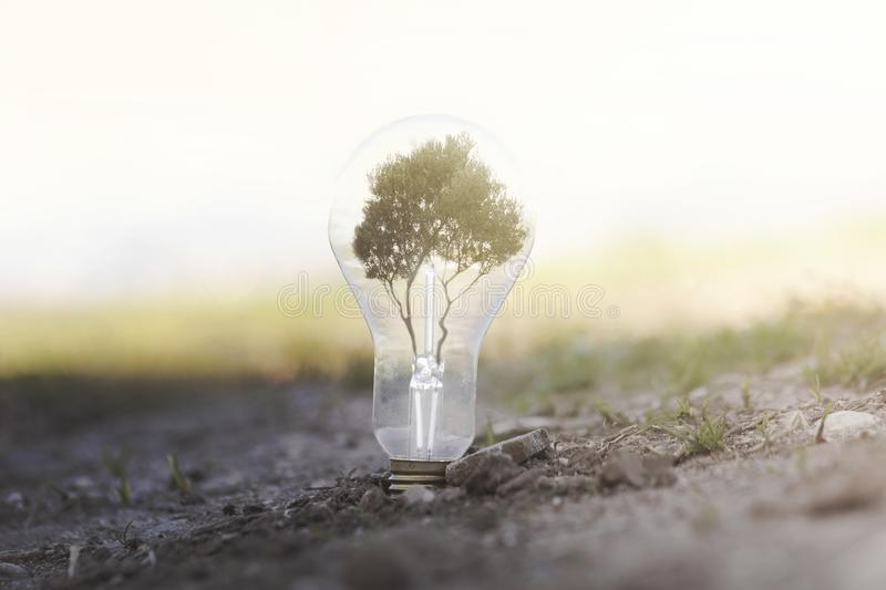 Conceptual image of renewable energy. A light bulb planted on the earth with a tree inside that produces light and clean energy stock images