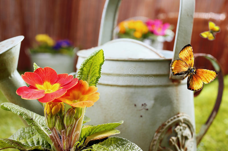 Summer garden with butterflies. Conceptual image of a summer country garden with an old retro metal watering can, vivid orange ornamental flowers and flying stock photo