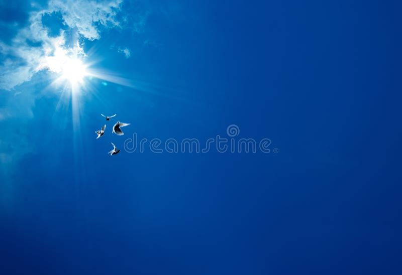 Blue sky and seagulls stock photography