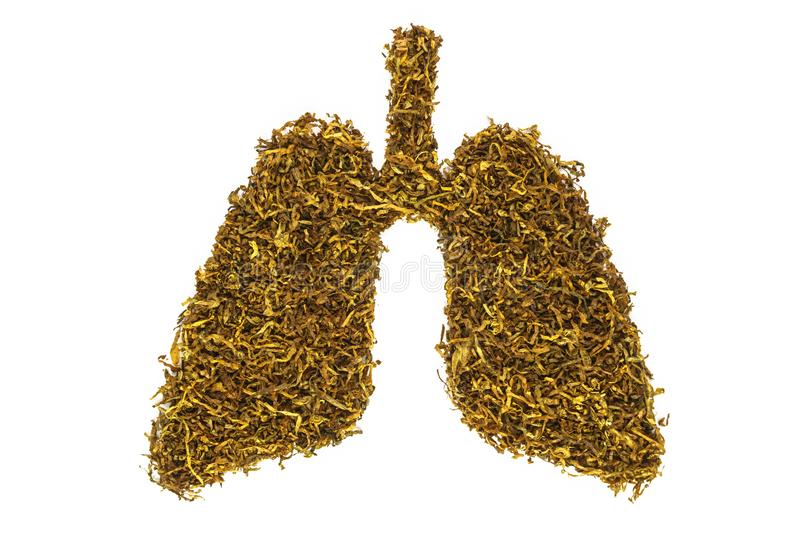 Conceptual image of tobacco shaped like human lungs. No smoking. royalty free stock image