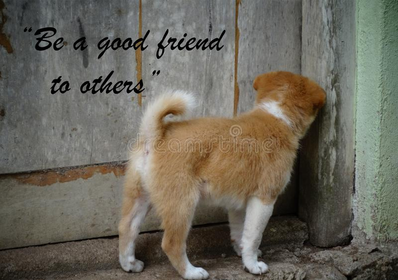 Puppy Quote Stock Photos - Download 30 Royalty Free Photos