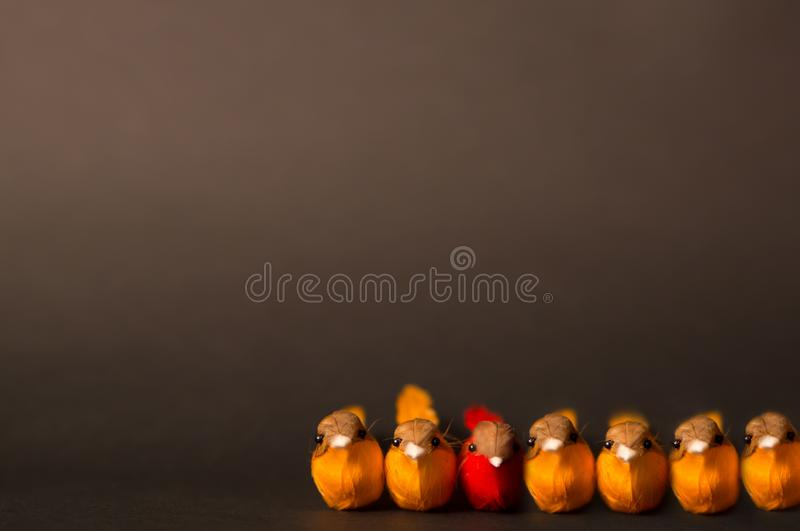 Conceptual photo on the topic - freedom of choice - to be yourself, not like others. Image of orange birds and one red on a dark royalty free stock photography