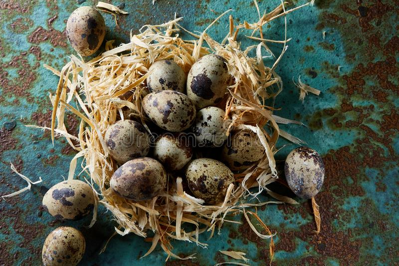 Conceptual still-life with quail eggs in hay nest over blue textured background, close up, selective focus royalty free stock images