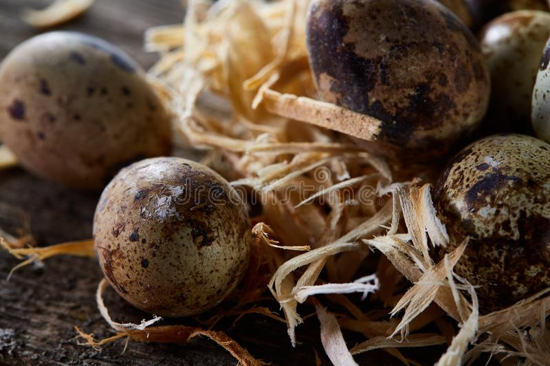 Conceptual still-life with quail eggs in hay nest over dark wooden background, close up, selective focus stock image