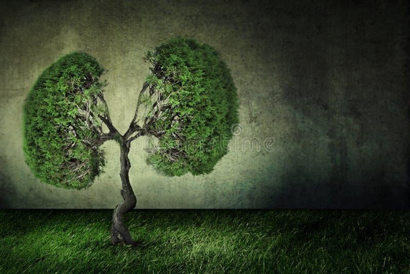 Conceptueel beeld van groene die boom als menselijke longen gestalte wordt gegeven royalty-vrije stock foto's