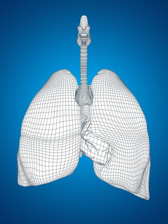 Conceptueel menselijk het netwerk ademhalingssysteem van mensen 3D wireframe vector illustratie