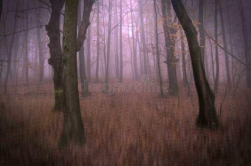 Conceptuele foto van fantastische dromerige bosdieweg met mist wordt behandeld stock foto's