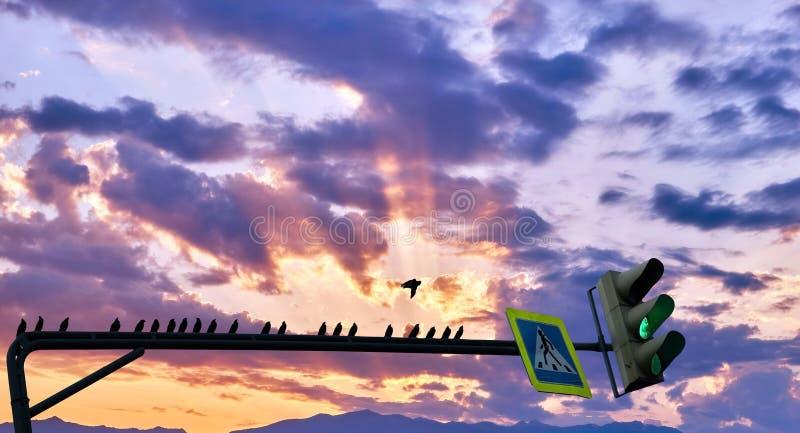 Conceptuele mening van groene verkeerslichten met silhouetten van donkere vogels op de achtergrond van zonsondergangwolken van de royalty-vrije stock afbeelding