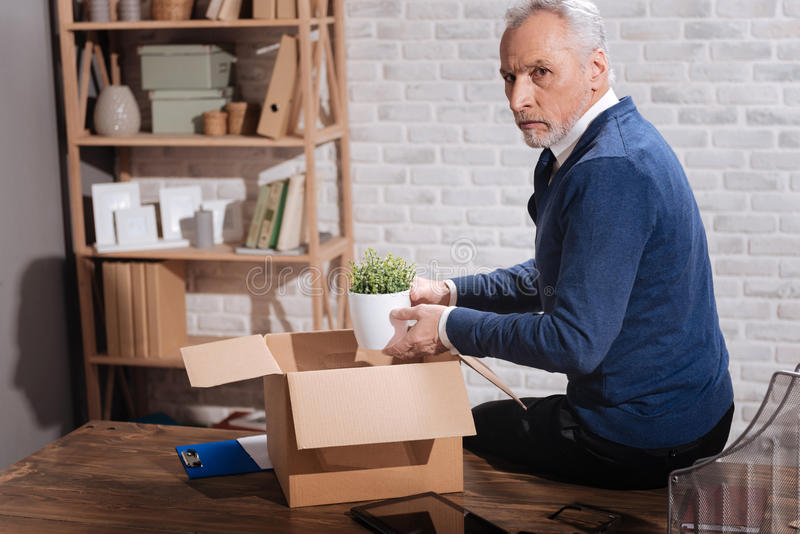 Concerned entrepreneur encasing his office stuff. I do not want to leave. Stylish sad elderly man putting his plant in a box while packing his belonging after stock image