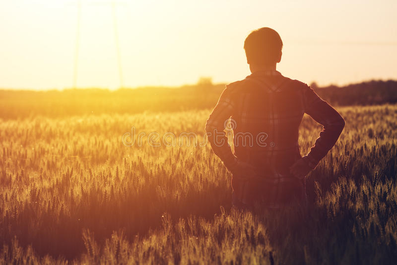 Concerned female agronomist standing in cultivated wheat crops f. Ield and looking to a beautiful sunset on the horizon stock photo