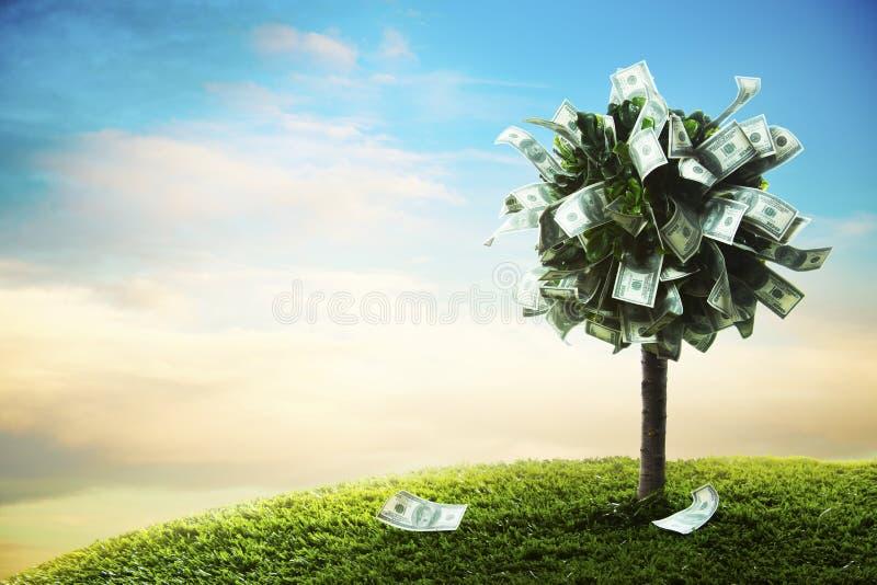 Concetto, albero dei soldi su erba immagini stock libere da diritti