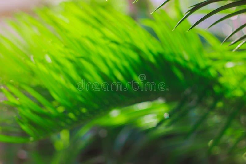 Concetto blured verde estate nel clima tropicale fotografie stock