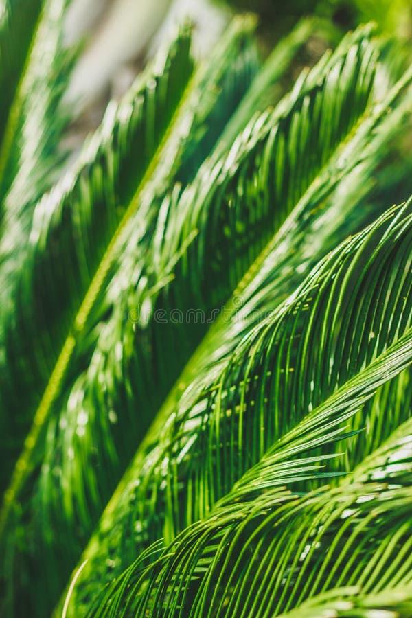 Concetto blured verde Istantanea verticale estate nel clima tropicale fotografia stock libera da diritti