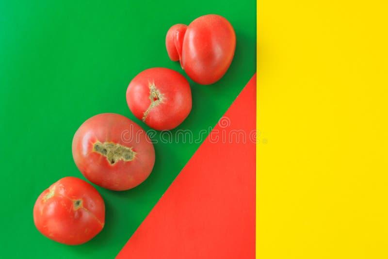 Concetto brutto dell'alimento, pomodori deformi sui precedenti rossi, verdi e gialli, spazio della copia, immagine geometrica cre fotografie stock