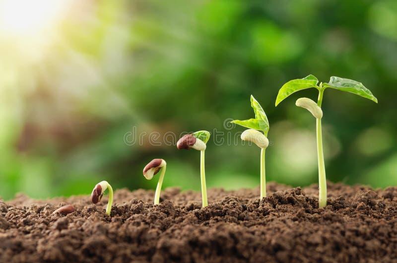 concetto crescente di semina di punto della pianta di agricoltura giardino ed in Unione Sovietica fotografia stock libera da diritti