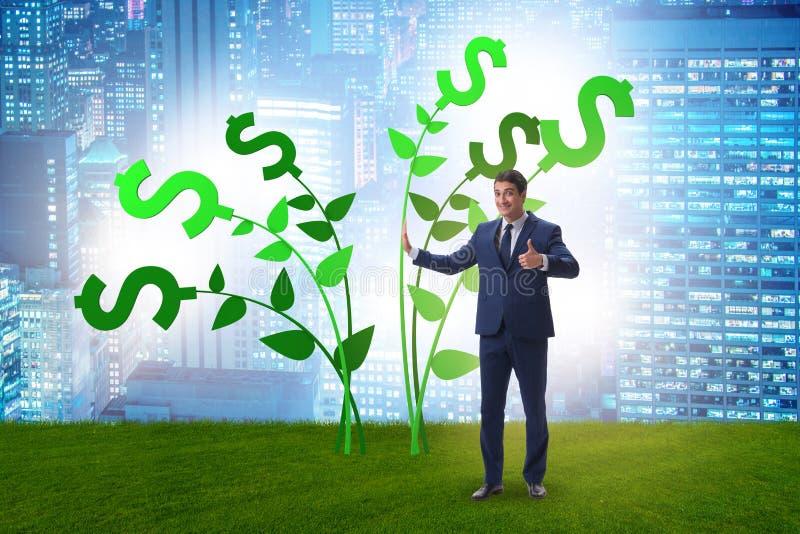 Concetto dell'albero dei soldi con l'uomo d'affari nei profitti crescenti immagine stock