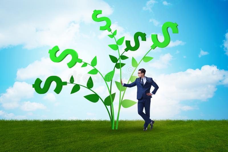 Concetto dell'albero dei soldi con l'uomo d'affari nei profitti crescenti fotografie stock