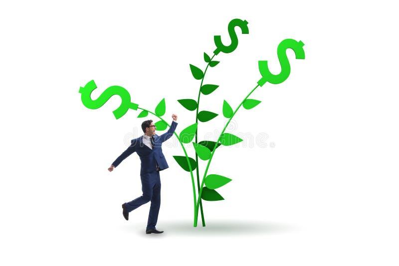Concetto dell'albero dei soldi con l'uomo d'affari nei profitti crescenti immagini stock libere da diritti