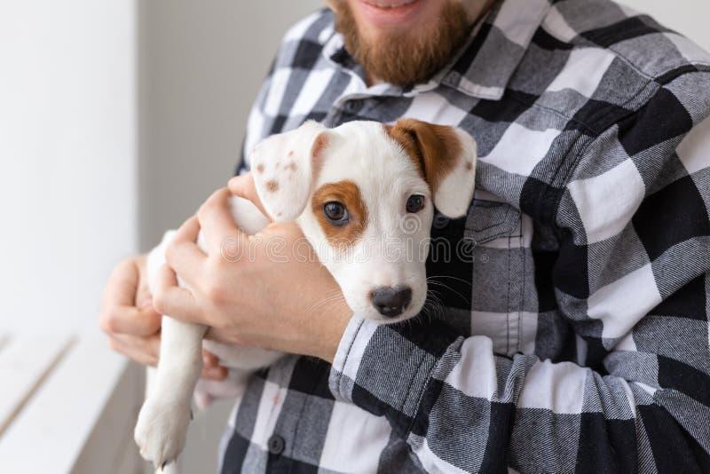 Concetto dell'animale domestico e della gente - fine sul ritratto del cucciolo del terrier di russell della presa che si siede su immagini stock