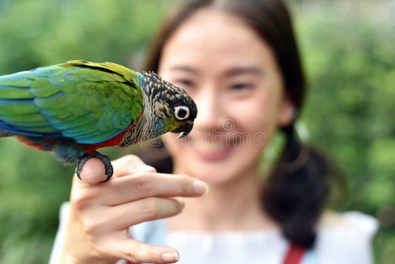 Concetto dell'essere umano e della natura dell'ambiente, uccello del pappagallo sulla mano della ragazza fotografia stock